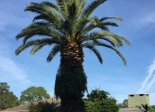 website-pics-palm-tree