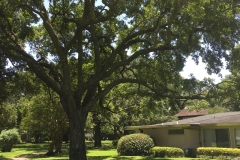 website-tree-pics-home-2